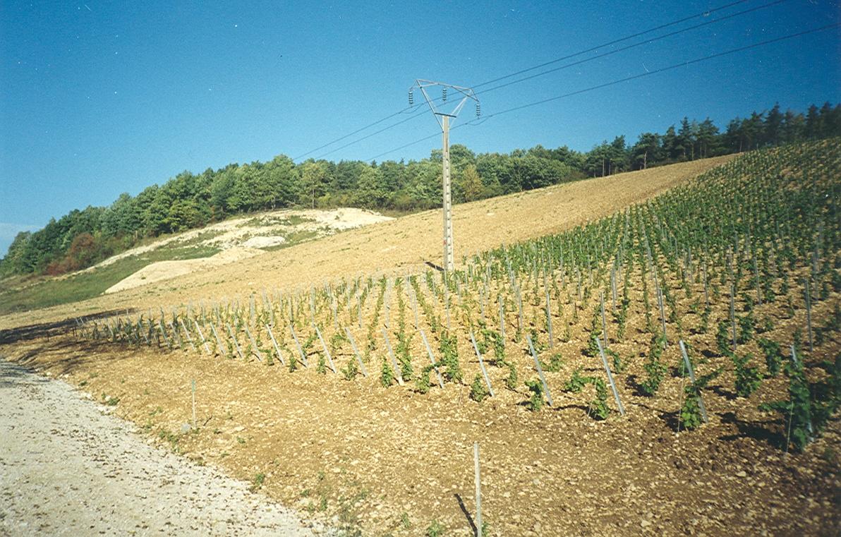 Les nouvelles vignes en appellation
